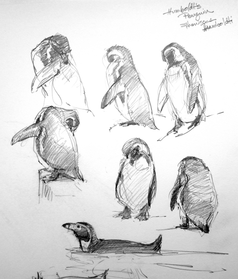 "Humboldt's penguins, Copenhagen Zoo, pencil on Robert Bateman 8 1/2"" x 11 sketchbook."