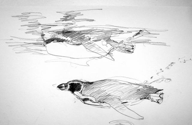 """Humboldt's penguins at the Copenhagen Zoo, underwater view. Pencil on Robert Bateman 8 1/2"""" x 11 sketchbook."""