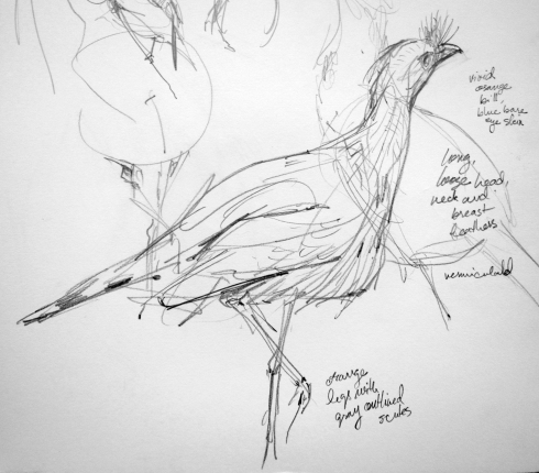 """Crested seriema, Copenhagen Zoo. Pencil on Robert Bateman 8 1/2"""" x 11 sketchbook."""