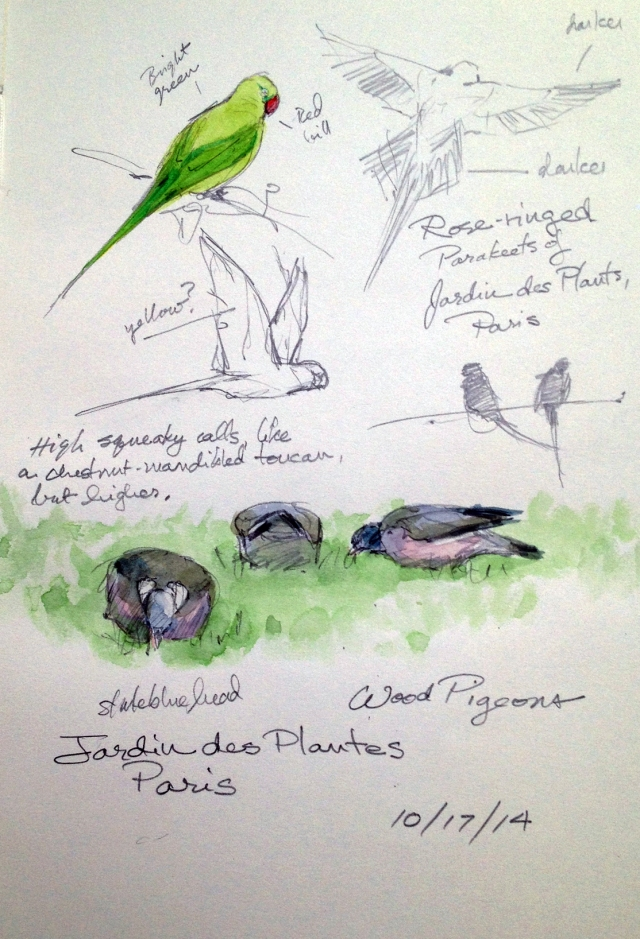 Meanwhile, at the Jardin des Plantes, further down along the Seine, the rose-ringed parakeets (introduced and thriving) chattered from the yews and wood pigeons picked at the tidy forbidden lawns (we got yelled at when Antman tried to pose with a statue of Lamarck and walked on the grass).