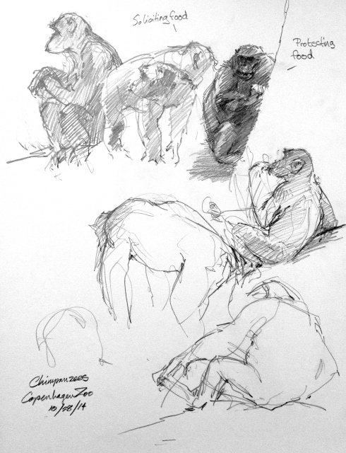 A little figure-sketching in the chimpanzee house, Copenhagen Zoo.
