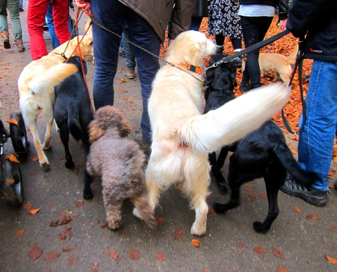 Lots of doggies at the hunt. All well groomed, and very well behaved. No foxhounds, though.