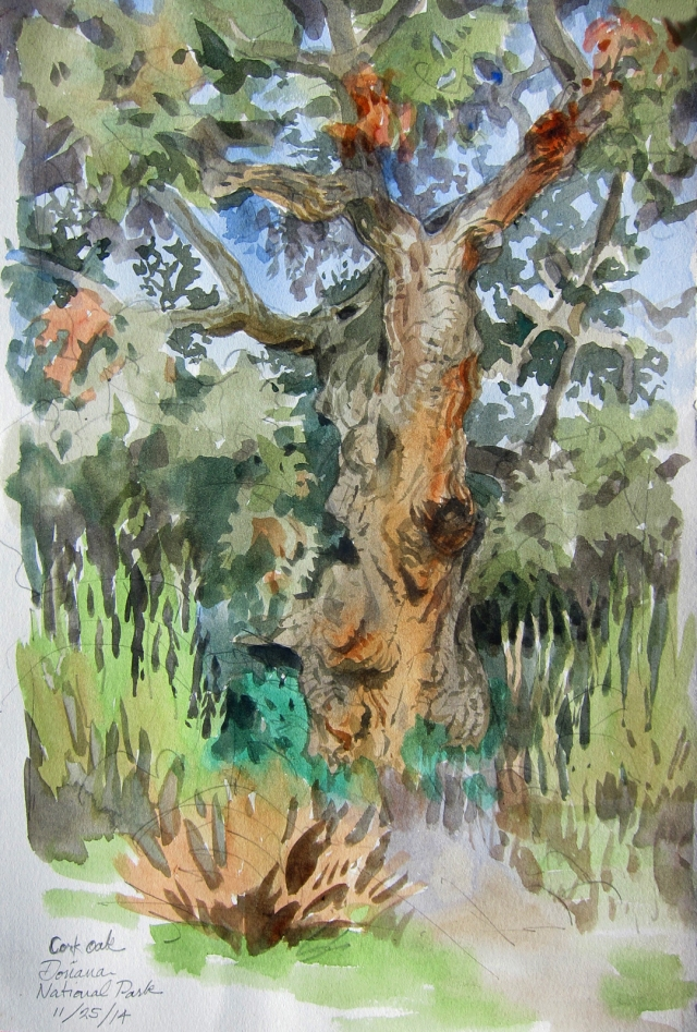 """Cork oak in bright morning sun. Curlicue branches and deeply pleated bark, many slabs of which were scattered on the ground, colonized by ants. It's a fine-looking tree, and now that everyone's switching to screw-caps, maybe it can grow in peace. Doñana National Park, southern Spain. Watercolor over pencil on 8 1/2"""" x 11"""" Lana spiral-bound drawing book."""