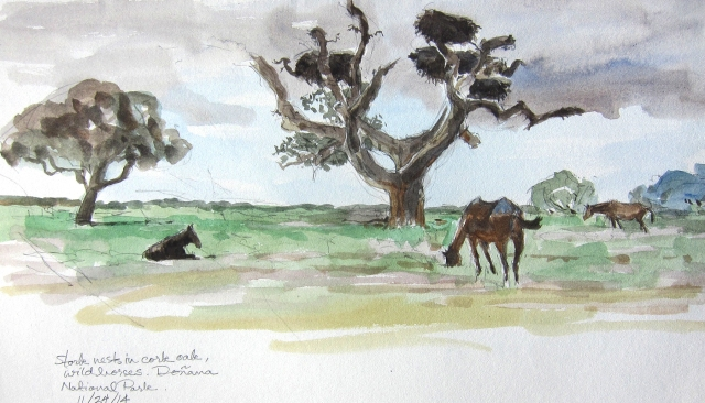 """Stork nests, cork oak, and  Spanish not-so-wild wild horses. They roam at will, same as the spotted cattle, wild boars and deer herds. White storks cruised overhead, just to let me know they hadn't sublet the property. Watercolor over pencil, 8 1/2"""" x 11"""", Lana spiral bound drawing book."""