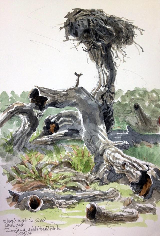 White stork nest; dead cork oak, Doñana