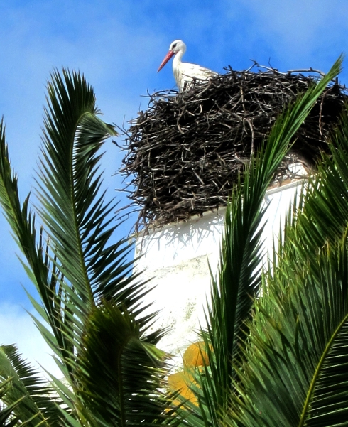 They really do nest on chimneys, and although it looks it, this one is not a plastic lawn ornament.