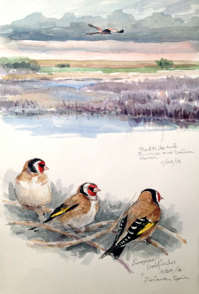 "Doñana marsh at sunrise with red kite leaving its night roost for a day in the field. Below, European goldfinches, perched in the poplars at the edge of the marsh. Watercolor over pencil, Lana 1590 sketchbook, 8 1/2"" x 11"""