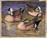 American Wigeons watercolor