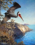 Brown Pelican acrylic