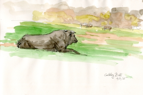 "Relaxed rodeo bull chews cud in fresh spring Oklahoma pasture. I drove down random country roads today, looking for nice things to paint. This sweet scene presented itself and I pulled off the road to sketch it. It's also a great way to meet ranchers. Who were friendly and welcoming when they learned I was only there to sketch. Watercolor over pencil, 10"" x 8"" Strathmore 400 Series Field Drawing sketchbook."