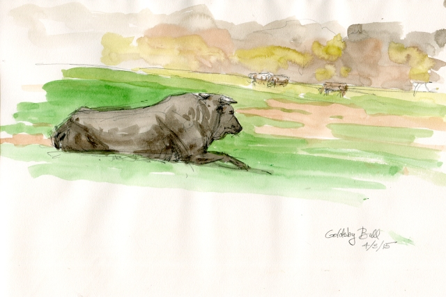 """Relaxed rodeo bull chews cud in fresh spring Oklahoma pasture. I drove down random country roads today, looking for nice things to paint. This sweet scene presented itself and I pulled off the road to sketch it. It's also a great way to meet ranchers. Who were friendly and welcoming when they learned I was only there to sketch. Watercolor over pencil, 10"""" x 8"""" Strathmore 400 Series Field Drawing sketchbook."""