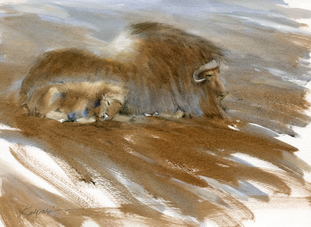 """Here's something along similar lines- a muskox with her baby flanked against the wind. It's from a life sketch made at the Copenhagen Zoo this fall, and I'm happy to say it's been selected for the show, Art of the Animal Kingdom XX at the Bennington Center for the Arts. Oil on Arches primed paper, 15"""" x 11"""". Titled, """"Ice Age""""."""