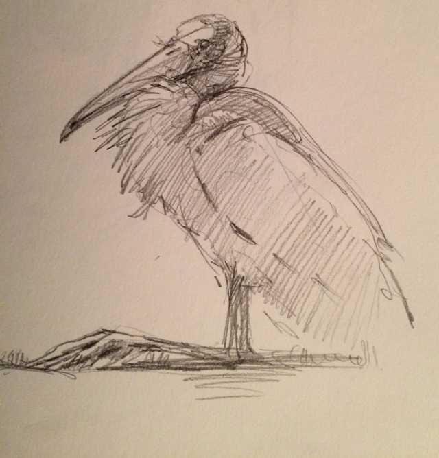 A wood stork sits back on its heels on the groomed fairway. The storks like to hang on the grass and will clumsily get to their feet and stalk off when golfers arrive. Pencil on paper.