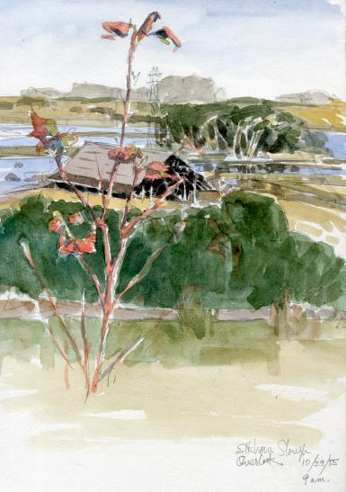 My last morning at Elkhorn Slough, brilliant sunshine on the water, red leaves on a low bush, glowing. Old, decomissioned Elkhorn Dairy barn standing on the hill. Watercolor over pencil on Lana Sketchbook.