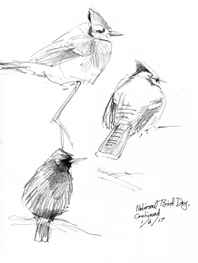 feederbirds002
