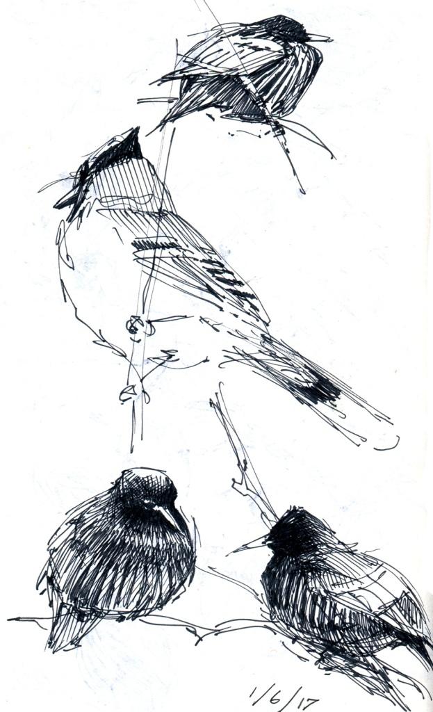 feederbirds007