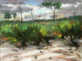 Florida Scrubland