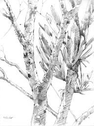 Canopybromeliad