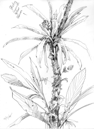 GreenFlowerEpiphyte