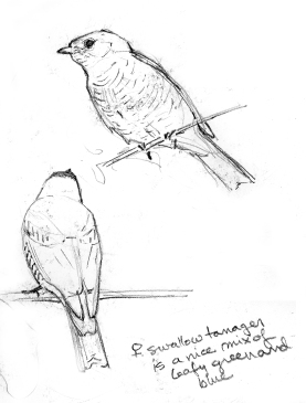 SwallowTanagers